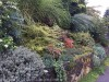 Have a sloping garden?  Tiers can stop the tears (sorry – couldn't help myself)